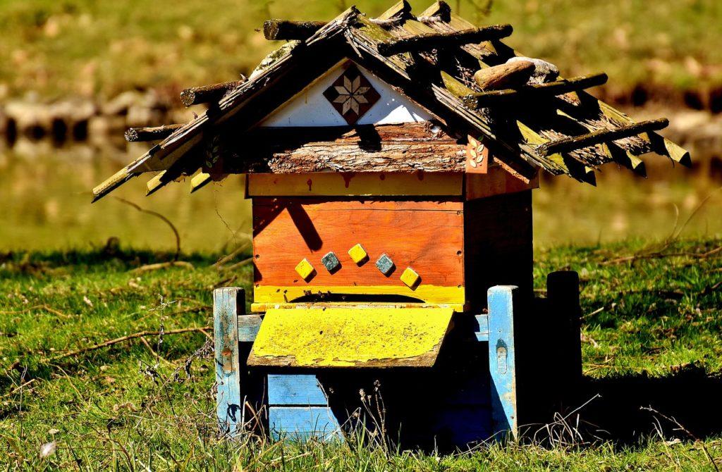 IoT: Monitorovanie včelích úľov s využitím internetu vecí 1